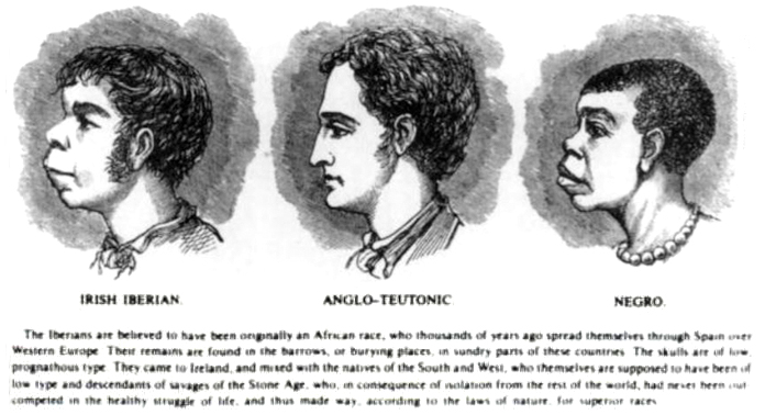 """This drawing of the profiles of three individuals, an """"Irish Iberian,"""" an """"Anglo-Teutonic,"""" and a """"Negro"""" exaggerates the similarities between the """"Iberian"""" and the """"Negro"""" while exaggerating the differences between these two and the """"Anglo."""""""