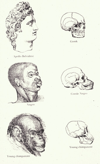 """This drawing exaggerates the differences between the heads of two individuals and their skulls, labeled """"Greek"""" and """"Negro,"""" while exaggerating the similarities between a """"Chimpanzee"""" and a """"Negro."""""""
