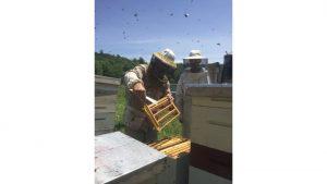 Kirk Webster holds a honey bee frame