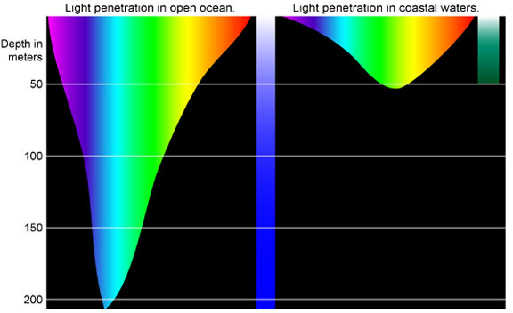 The amount of light decreases with ocean depth.
